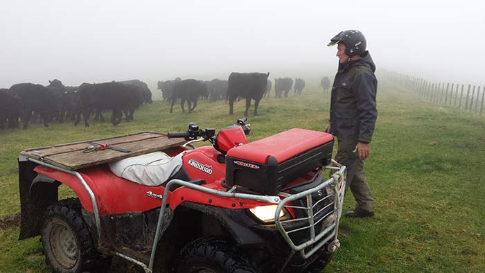 FArm-Manager-Clive-Carrington-on-the-job-with-the-wagyu