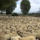 lambys